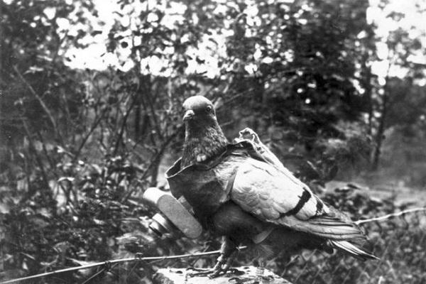 Les animaux de la Grande Guerre