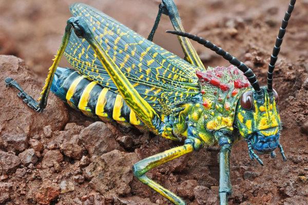 La biodiversité du monde en relief, le procédé Hyper focus