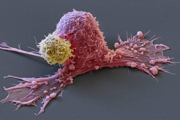 Apports des biotechnologies dans les innovations relatives à la santé